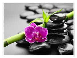 Poster Basalt stones, bamboo and orchid
