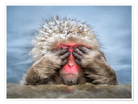 Premiumposter Japanese Macaque in a hot spring