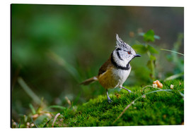 Aluminiumtavla  Cute tit standing on the forest ground - Peter Wey