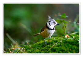 Premiumposter  Cute tit standing on the forest ground - Peter Wey