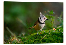 Trätavla  Cute tit standing on the forest ground - Peter Wey