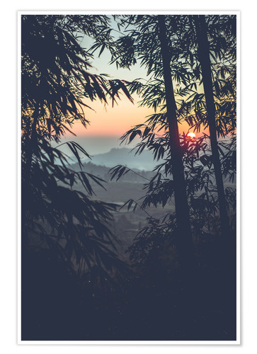 Premiumposter Bamboo in the sunset