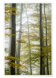Premiumposter Foggy forest in autumn foliage