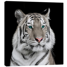 Canvastavla  Sumatran tiger with turquoise eyes