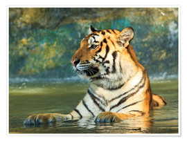 Premiumposter  Tiger lying in the water