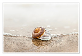Poster Lonely shell on a beach