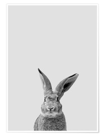 Premiumposter Follow the rabbit