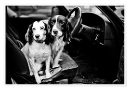 Premiumposter dogs in the car