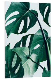 PVC-tavla  Monstera - Uma 83 Oranges