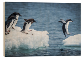 Trätavla  Adelie penguins between two ice floes - Nick Dale