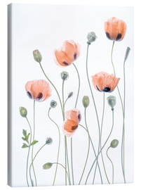 Canvastavla  Poppy poetry - Mandy Disher