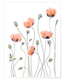 Poster  Poppy poetry - Mandy Disher