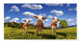 Premiumposter  Cows on the pasture - Michael Rucker