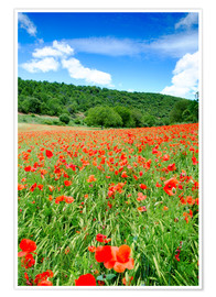 Premiumposter Poppy fields near Covarrubias