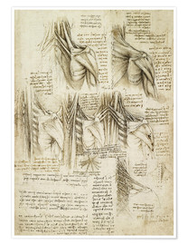 Poster  Muscles of the spine - Leonardo da Vinci
