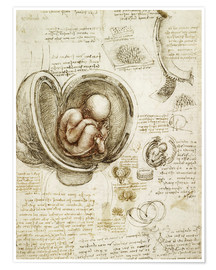 Poster  Studies of embryos - Leonardo da Vinci