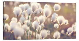 Canvastavla  Cottongrass - Julia Delgado