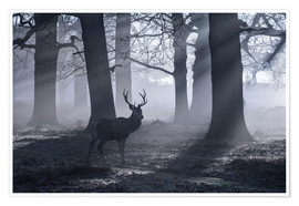 Premiumposter A male red deer stag waits in the early morning mists of Richmond park, London.