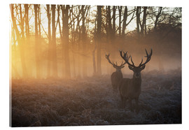Akrylglastavla  Two deers in a misty forest in Richmond Park, London - Alex Saberi