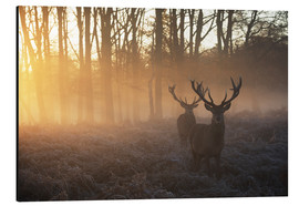 Aluminiumtavla  Two deers in a misty forest in Richmond Park, London - Alex Saberi