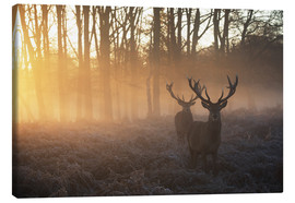 Canvastavla  Two deers in a misty forest in Richmond Park, London - Alex Saberi