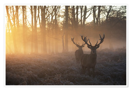 Premiumposter  Two deers in a misty forest in Richmond Park, London - Alex Saberi