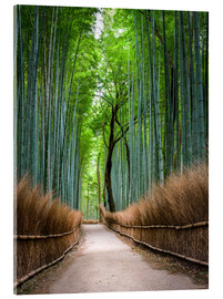 Akrylglastavla  Bamboo Forest in Kyoto Sagano Arashiyama, Japan - Jan Christopher Becke