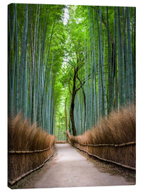 Canvastavla  Bamboo Forest in Kyoto Sagano Arashiyama, Japan - Jan Christopher Becke