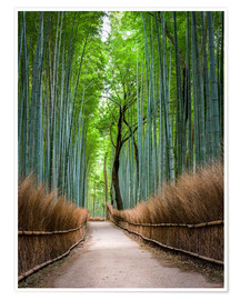 Premiumposter  Bamboo Forest in Kyoto Sagano Arashiyama, Japan - Jan Christopher Becke