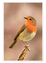 Premiumposter  Robin is offended