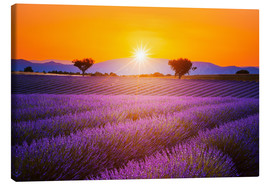 Canvastavla  Sun over lavender