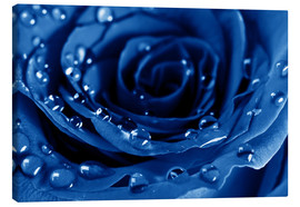Canvastavla  Blue Roses with Water Drops