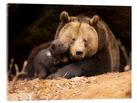 Akrylglastavla  Brown bear with young bear - Dieter Meyrl