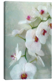 Canvastavla  Composition of a white orchid with transparent texture - Alaya Gadeh