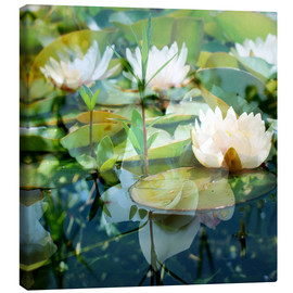 Canvastavla  Montage of white water lilies - Alaya Gadeh