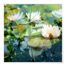 Poster Montage of white water lilies
