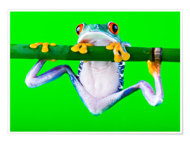 Poster  colorful frog on green