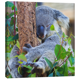 Canvastavla  Koala hugging tree