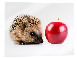 Akrylglastavla  Hedgehog and apple