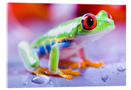 Akrylglastavla  colorful frog