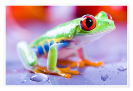 Premiumposter  colorful frog
