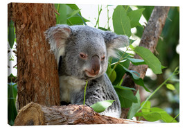 Canvastavla  Don Koala