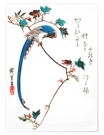 Poster Blue magpie on maple branch