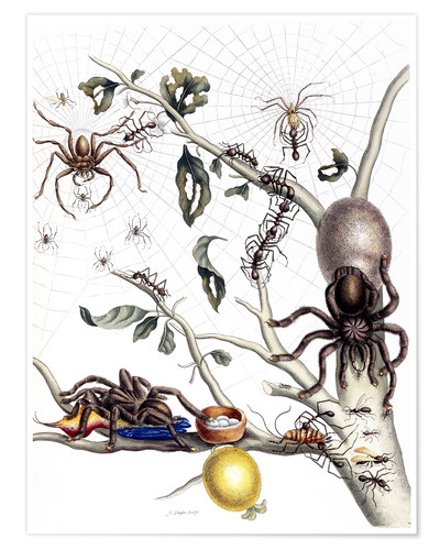 Poster Various Arachnids from South America