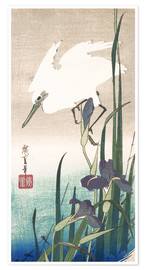 Premiumposter White heron and iris