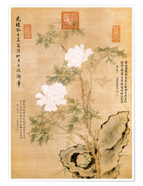 Premiumposter  Peonies and Rock - Chinese School