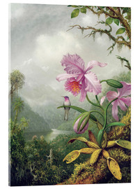 Akrylglastavla  Hummingbird Perched on an Orchid Plant - Martin Johnson Heade
