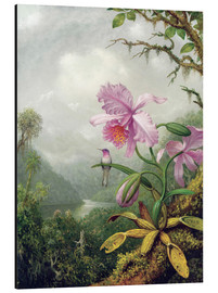 Aluminiumtavla  Hummingbird Perched on an Orchid Plant - Martin Johnson Heade