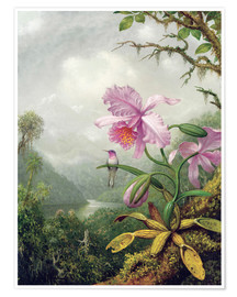 Premiumposter  Hummingbird Perched on an Orchid Plant - Martin Johnson Heade