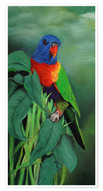 Premiumposter  colorful Rainbow lorikeet - Monica Schwarz